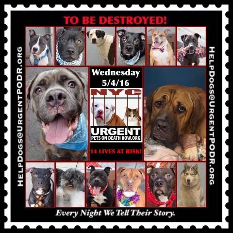 5/4 Please Share! SUPER URGENT 14BEAUTIFUL LIVES OF DOGS ...