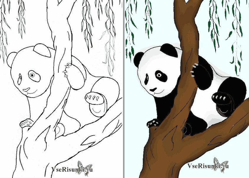 рисунок панды поэтапно трк миллер через