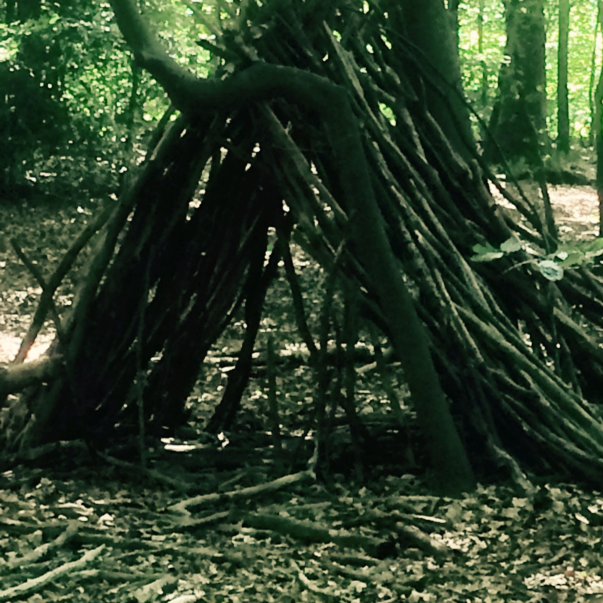 Hmmm wohnt hier rin  Indianer oder ein Hobbit oder haben doch nur Kinder gespielt