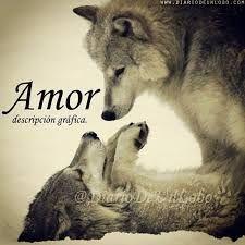 Resultado De Imagen De Frases De Lobos De Amor Frases Lobos