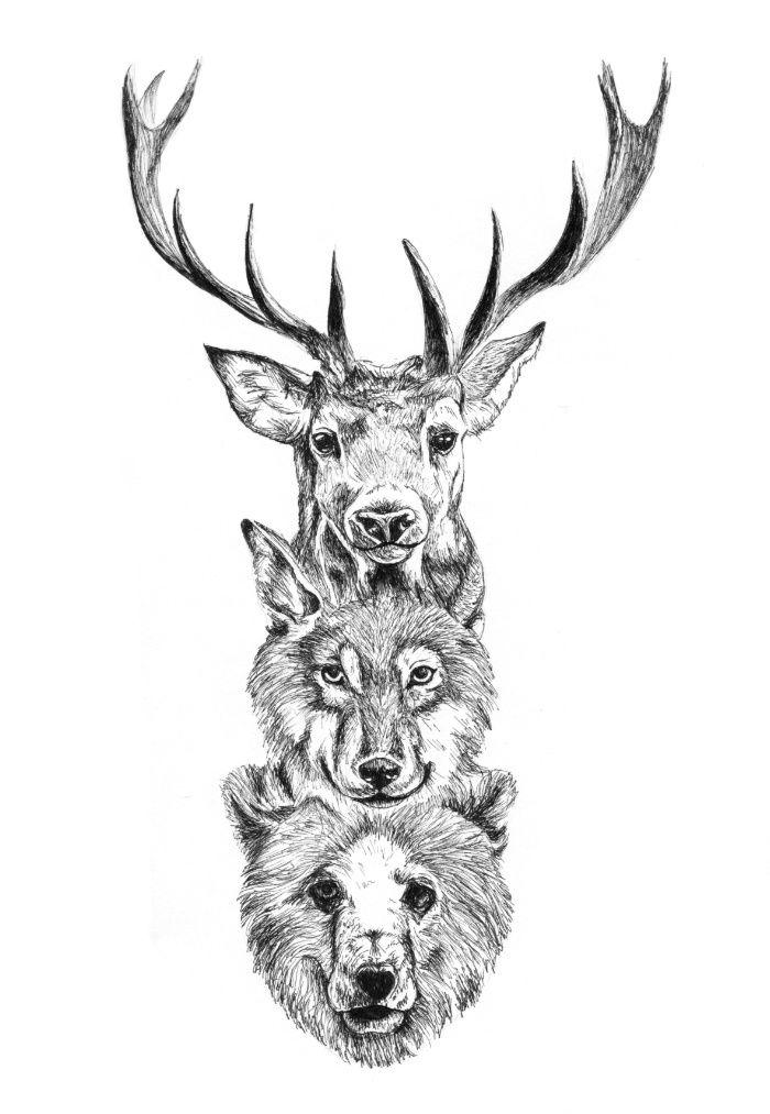nature, animals, animal, wolf...