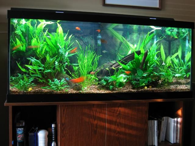Home Aquarium Design Ideas: ... Healthy Fish Tank Decorations