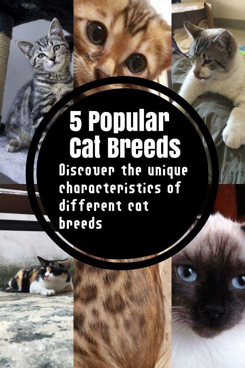 The Most Common Cat Breeds Cat Breeds Popular Cat Breeds Russian Blue Cat