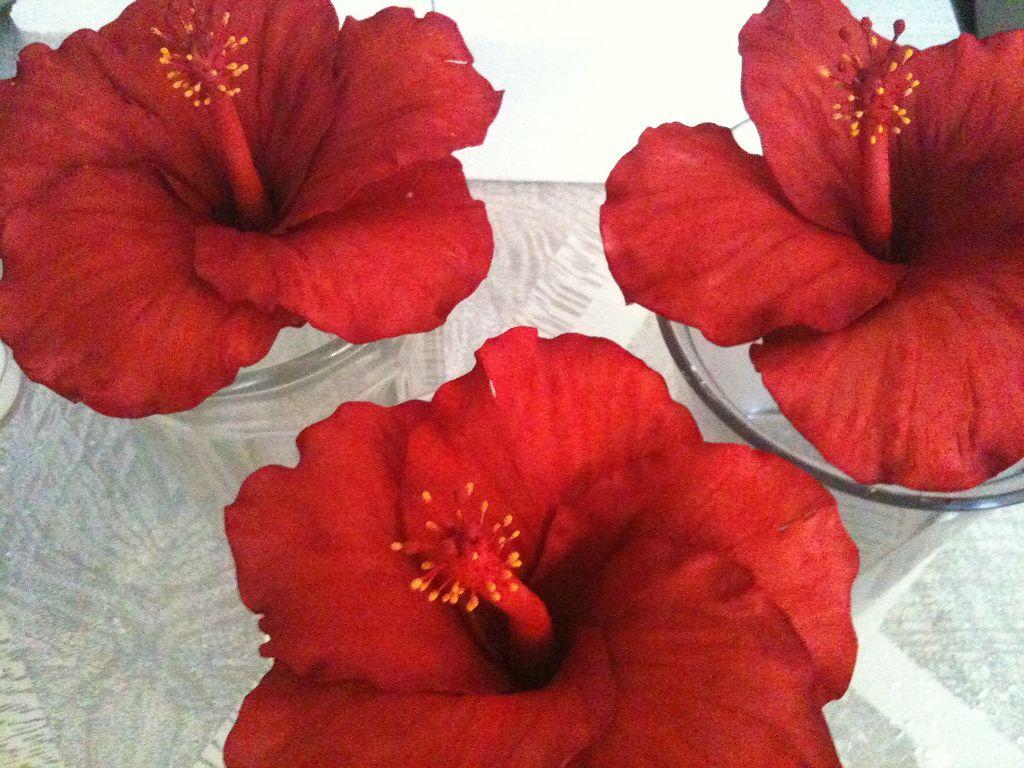 Sugar paste hibiscus flowers gum paste hibiscus flowers and hibiscus sugar paste hibiscus flowers gum paste sugar paste red h flickr izmirmasajfo Gallery