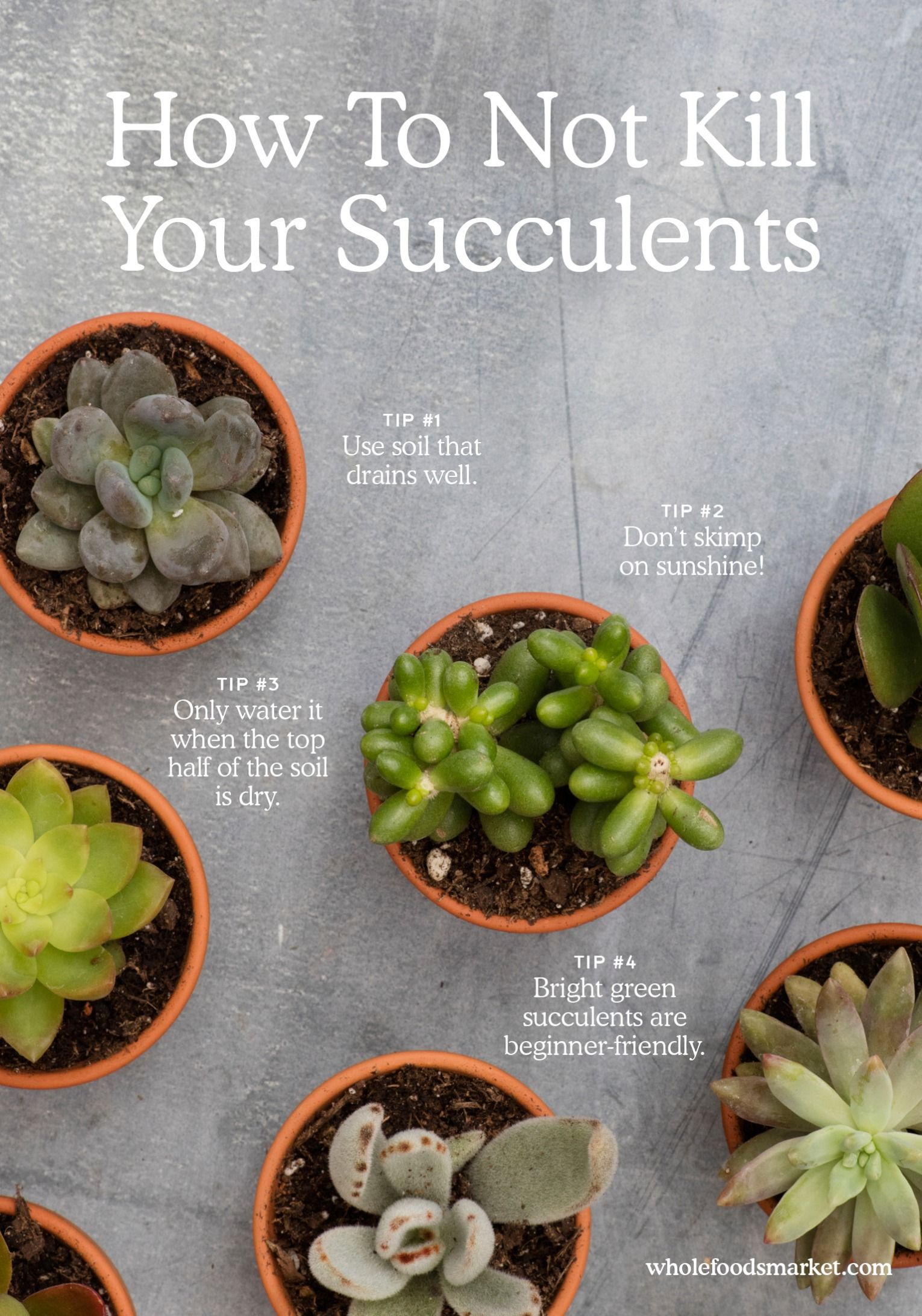 How Not To Kill Your Succulent Succulents Succulent Gardening