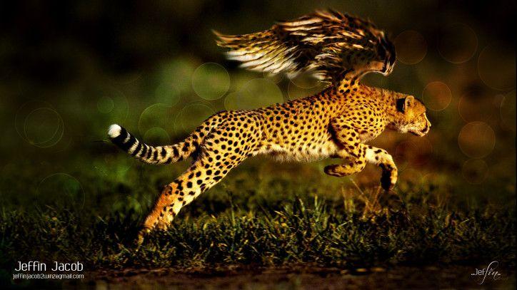 Unusual Animal Wallpaper Cheetah Wallpaper Black Jaguar Animal Jaguar Animal