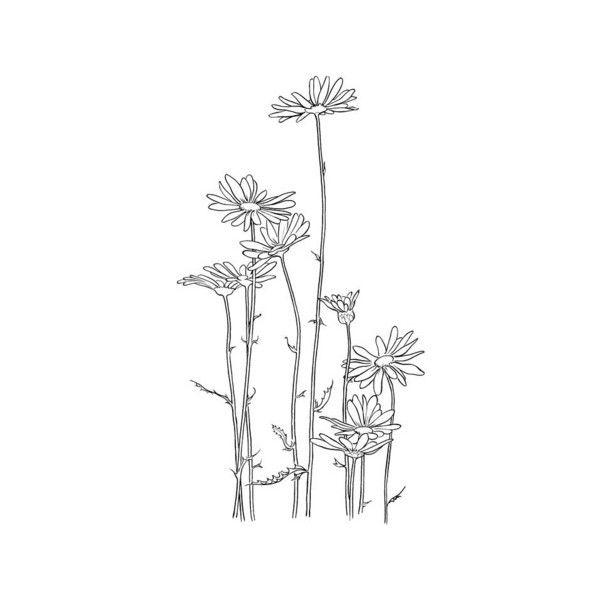 Alto Crisantemo Alcanzando El Sol | Colorear Dibujos ❤ liked on ...