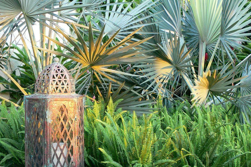 Large Tropical Modern Garden Highland Landscaping Archinspire Tropical Garden Design Tropical Garden Plants Tropical Garden