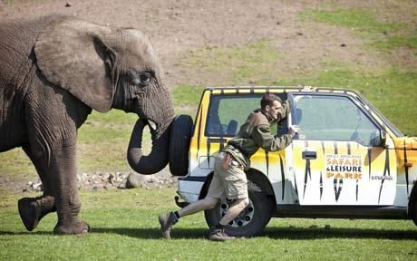 Five the Elephant provides breakdown assistance to zoo keeper :)