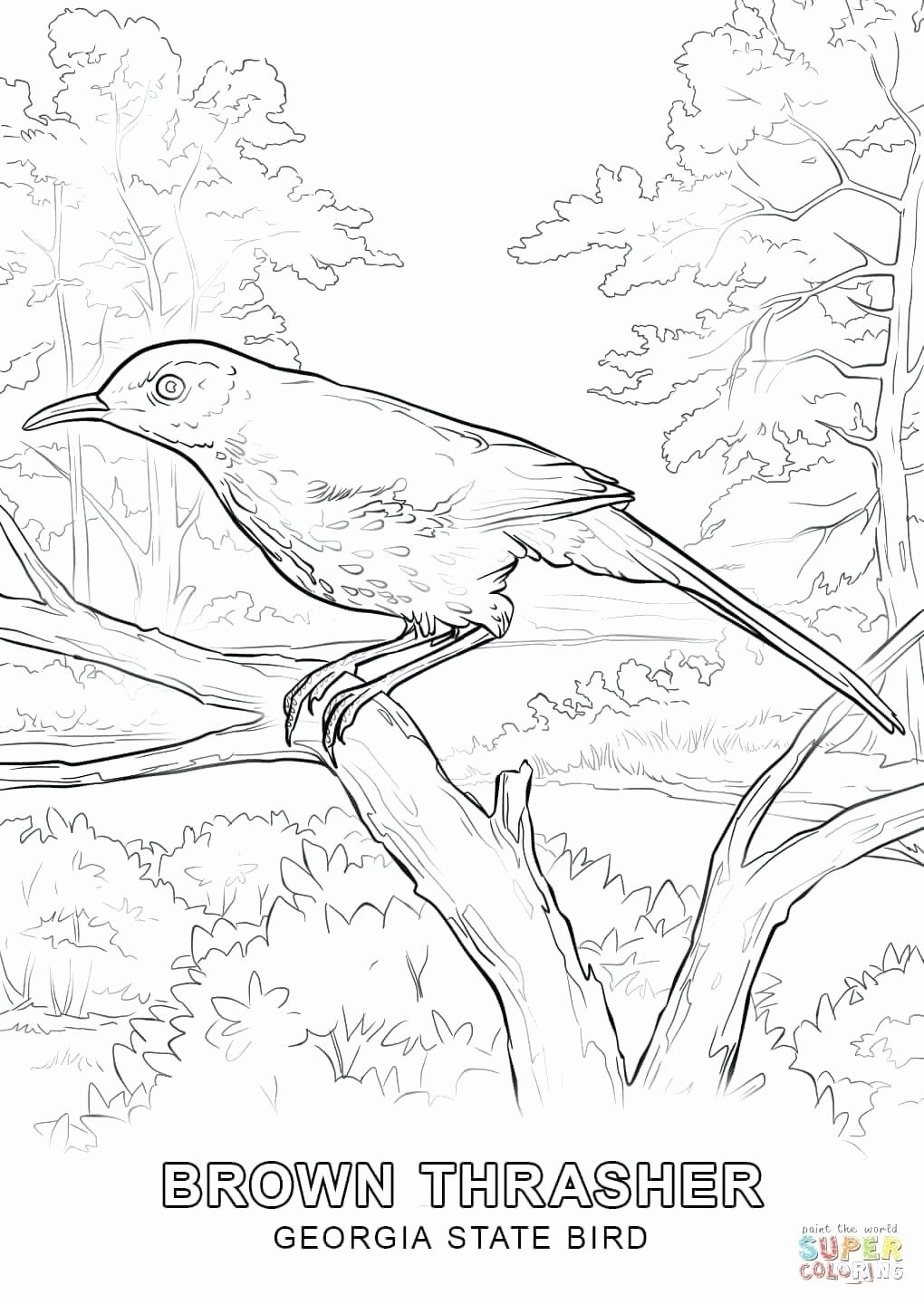 State Bird Coloring Page Best Of Alaska State Coloring Pages