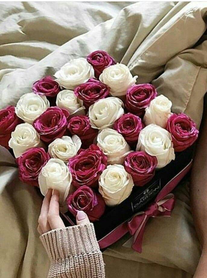 الأحلام مأهولة بالذكريات عامرة بضجيج الكلام وخالية من معنى لا يشير إليك أنت المعاني الآهلة بكل شيء في داخلي Rose Plants Flowers