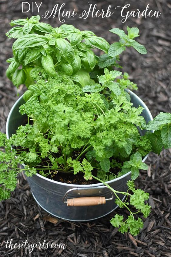 DIY Mini Herb Garden is part of Big garden People - Grow your own herbs today! This DIY mini herb garden is perfect for apartment dwellers or people who want fresh herbs without a huge garden commitment