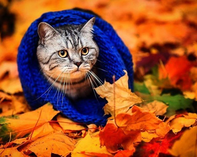 #осень
