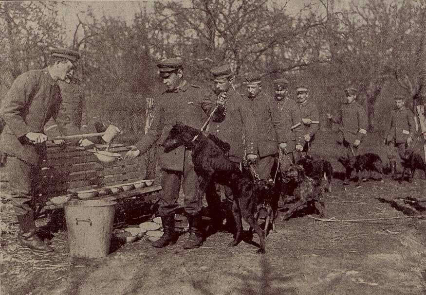 Wwi Feeding Line Doberman Military Dogs Dog Soldiers War Dogs