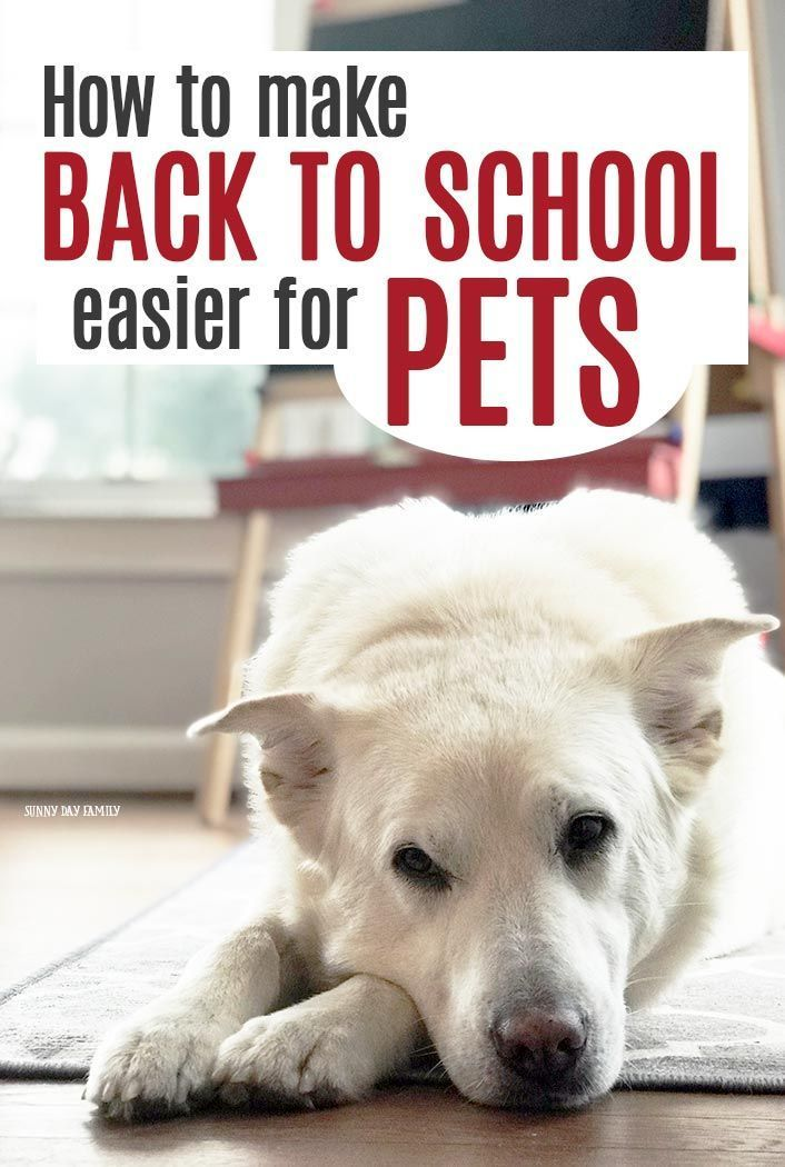 How To Make Back To School Easier For Pets More Saved Pins