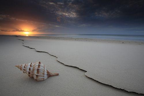 Gorgeous: Seashell Sunset in Queensland, Australia