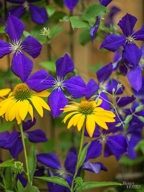 30 Ways To Pair Plants For The Most Beautiful Garden 400 x 300