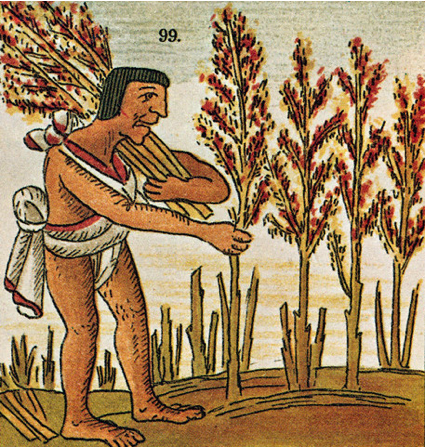Ancient Aztec Food | AMONG THE FIELDS OF GOLD | Pinterest ...
