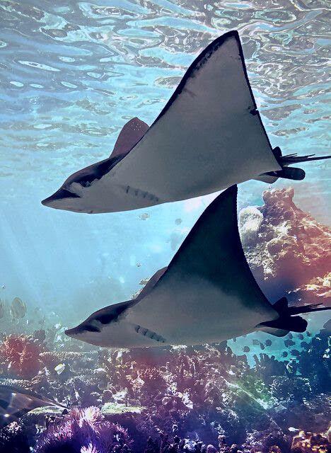 Fotografie Ocean Creatures Animals Ocean Animals