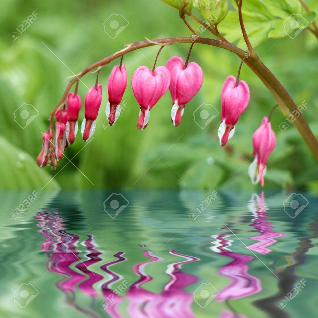 Love bleeding hearts flowers blooming genius pinterest bleeding hearts mightylinksfo