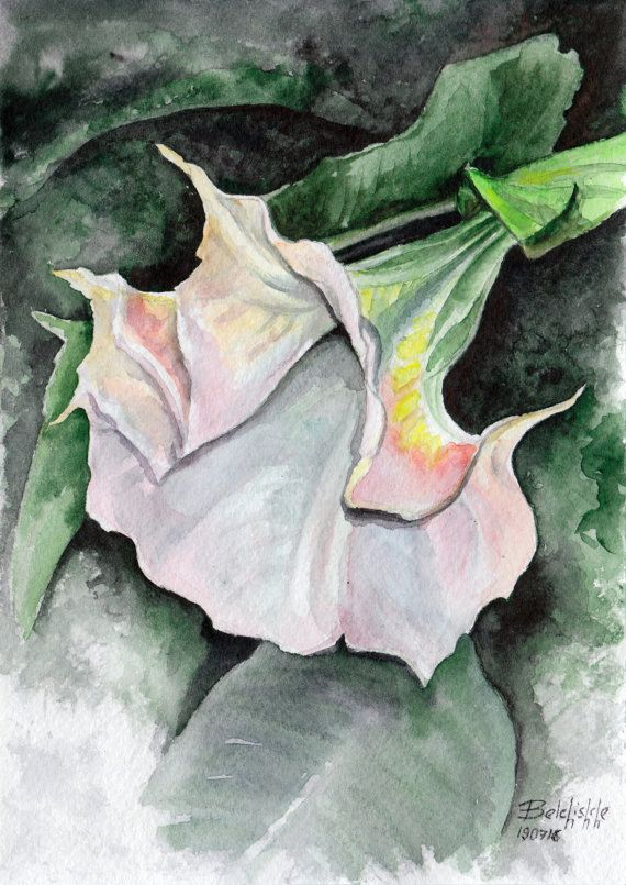 ORIGINAL watercolor painting Turkish datura  small by belchishche