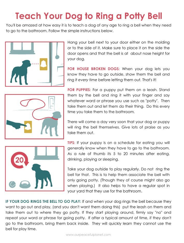 Pin By Madeline On Best Cat Training Potty Training Puppy Training Your Puppy Dog Training Obedience