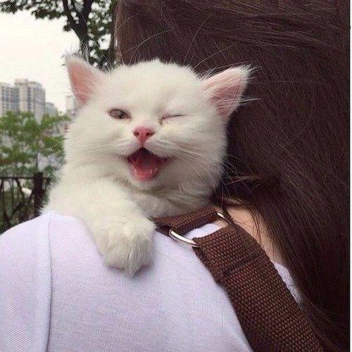 cat, cute, and animal imageの画像