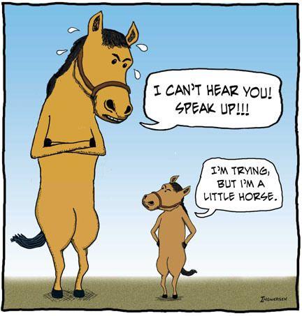 Horse jokes - photo#37