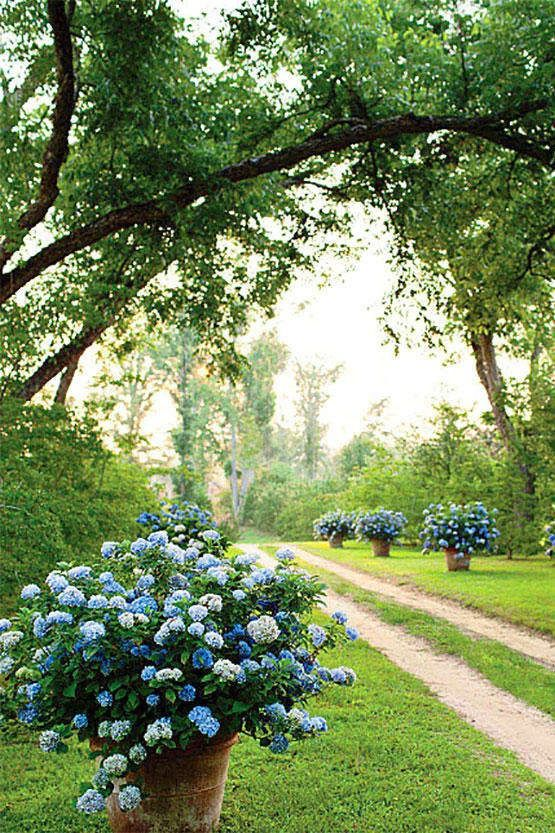 Wonderful 17 Dreamy Hydrangea Gardens That Are Giving Us Major Inspiration