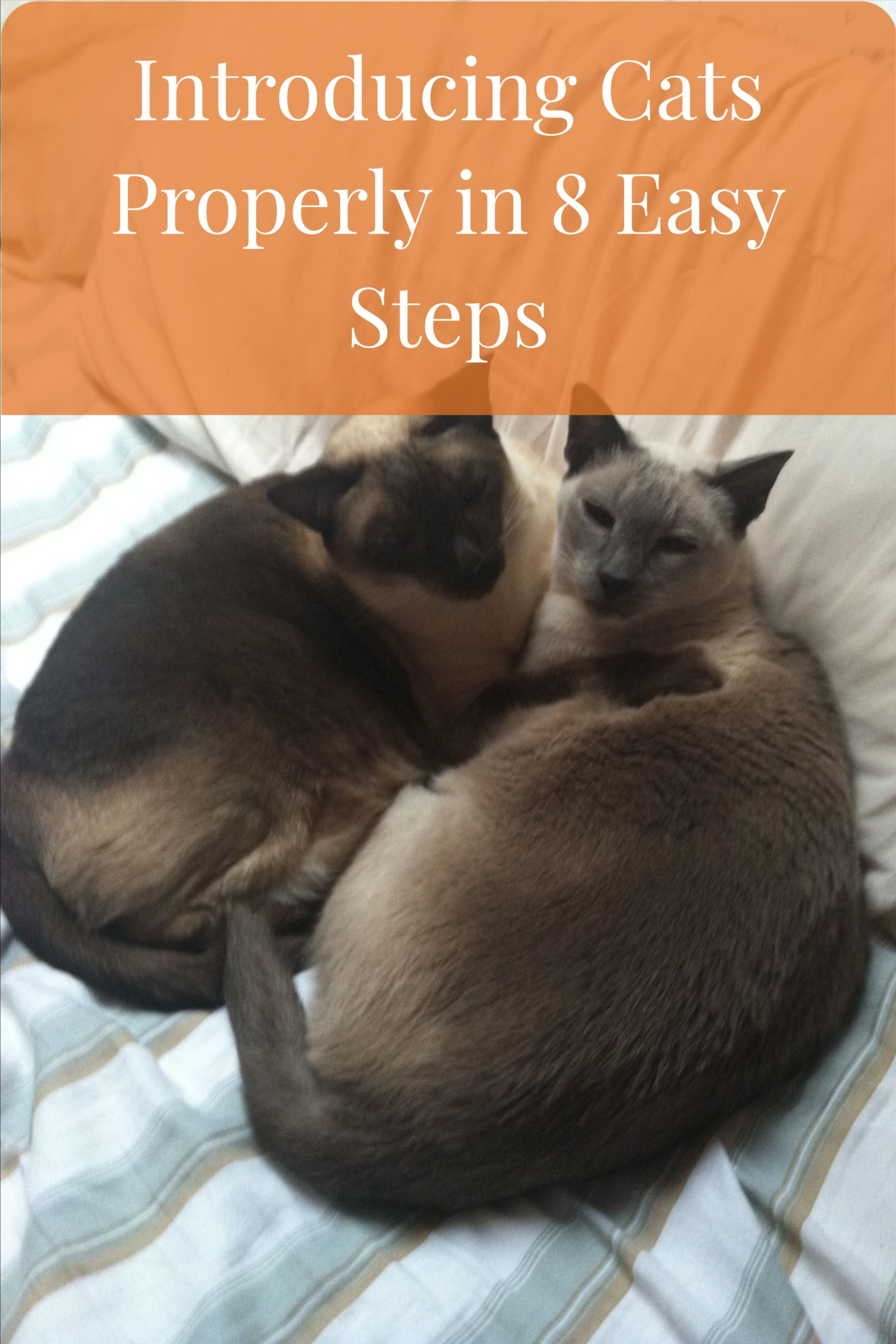 How to introduce cats fast 8 easy steps to a happy