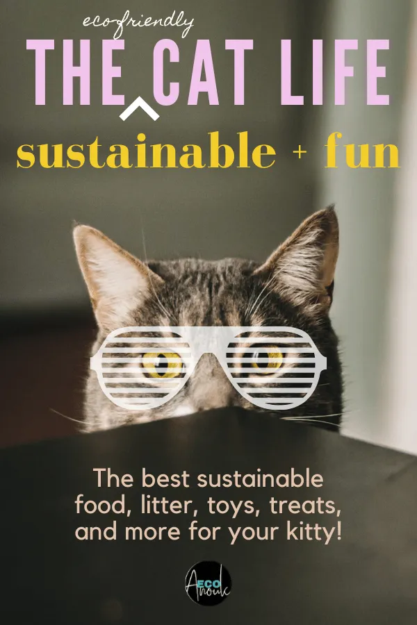 The Complete Guide to Sustainable Cat Care in 2020 (With
