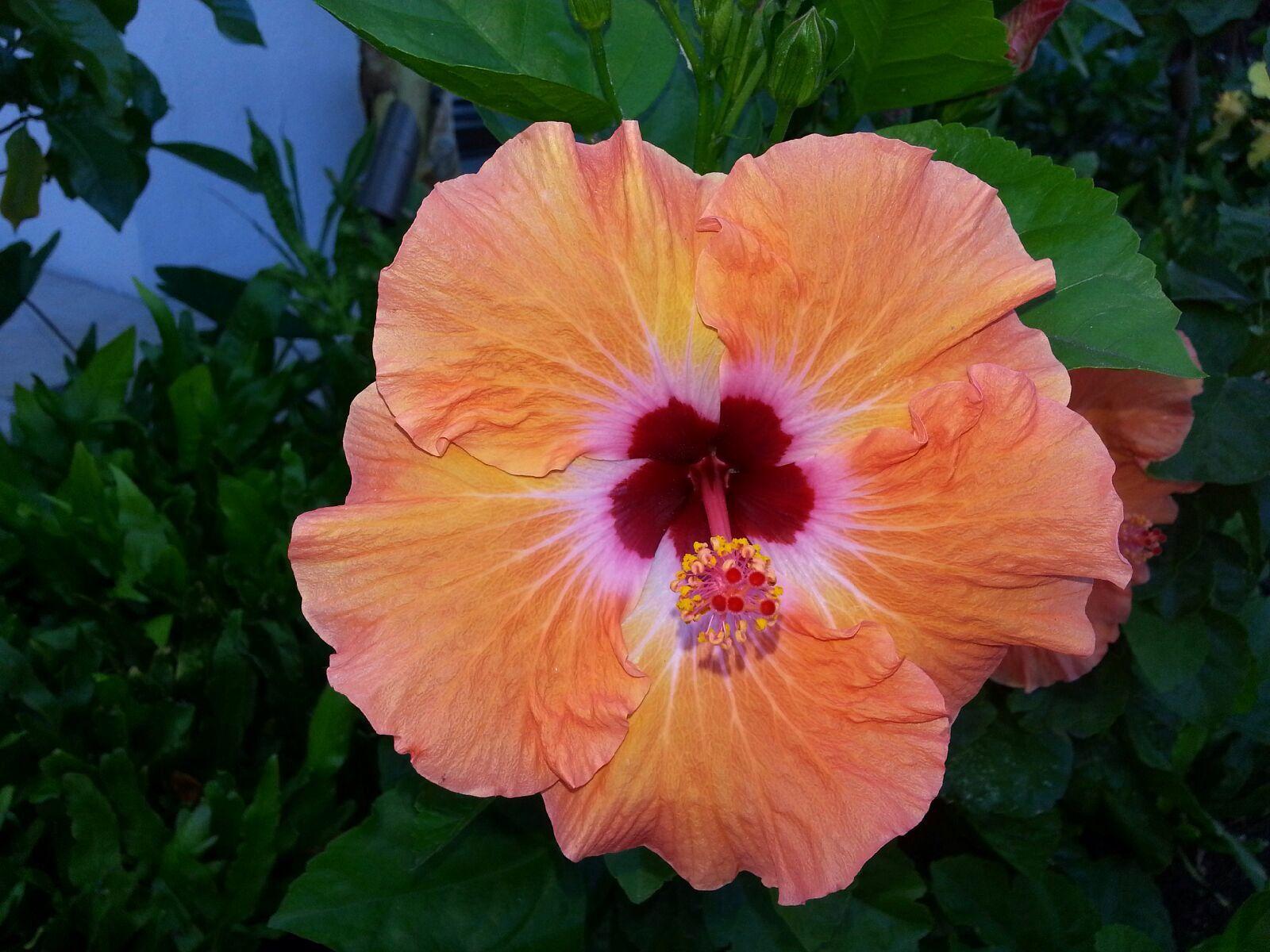 Flower Hawaii Pinterest Hawaii