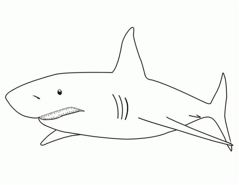 Requin Coloriage 8 Divertir Requin Coloriage Collection 122