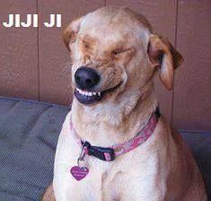 perro riendo y da risa