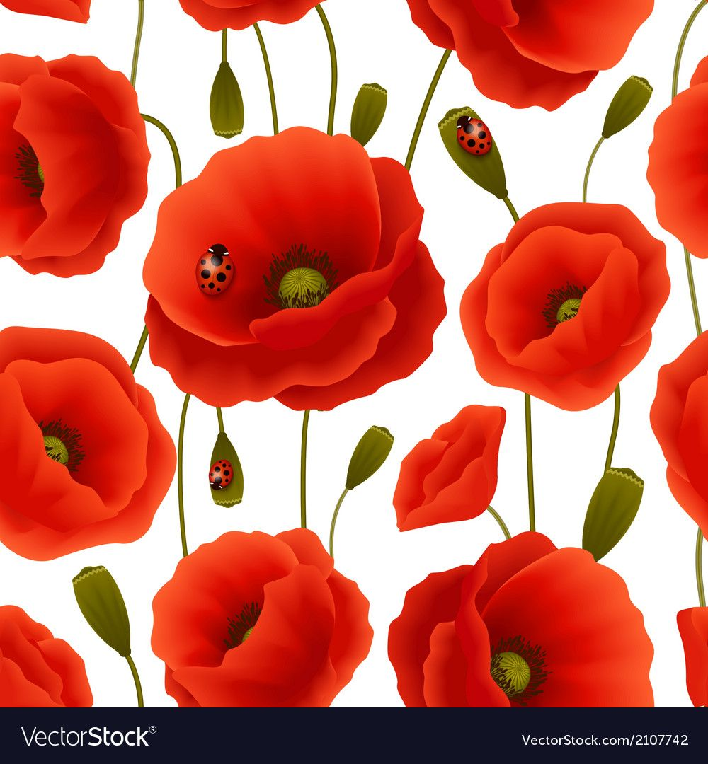Poppy seamless pattern vector image on (With images