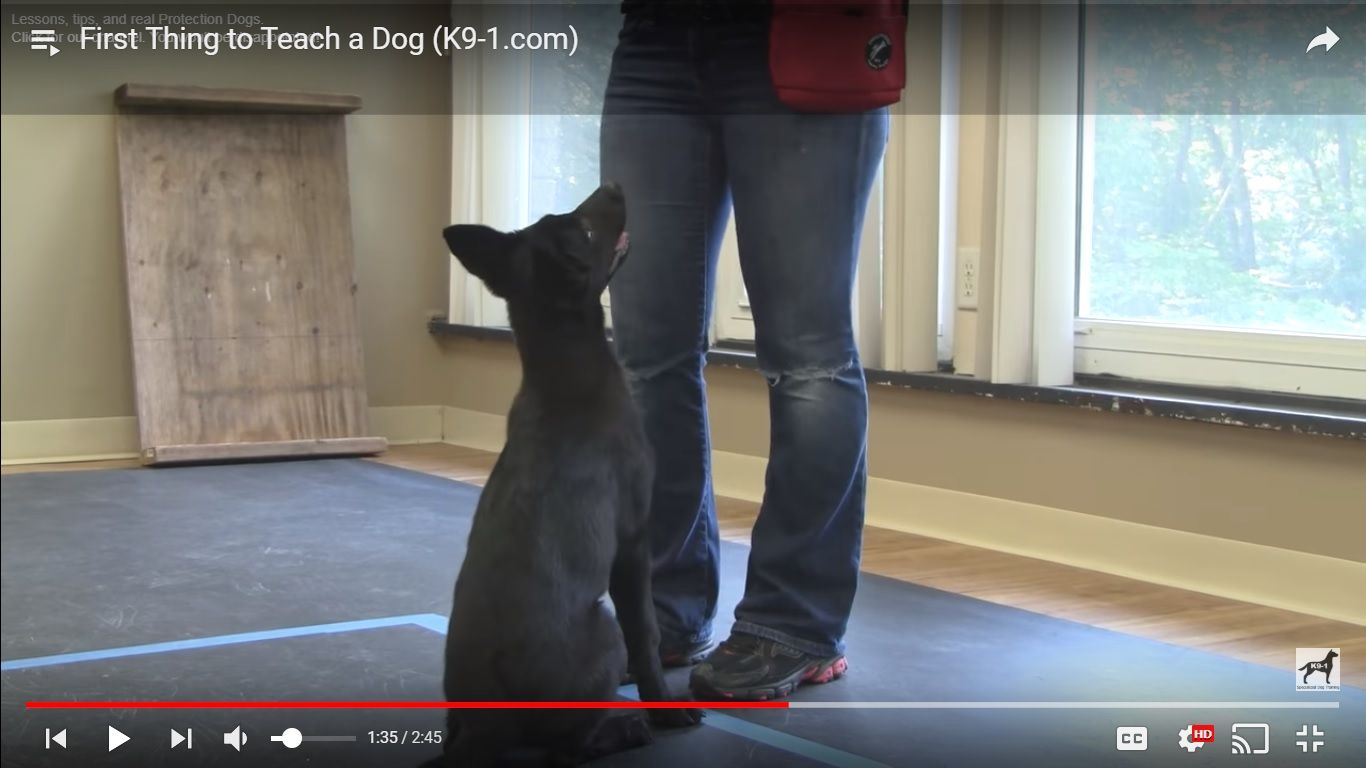 Watch The Best K9 1 Com Youtube Dog Training Videos Best K9 Dog