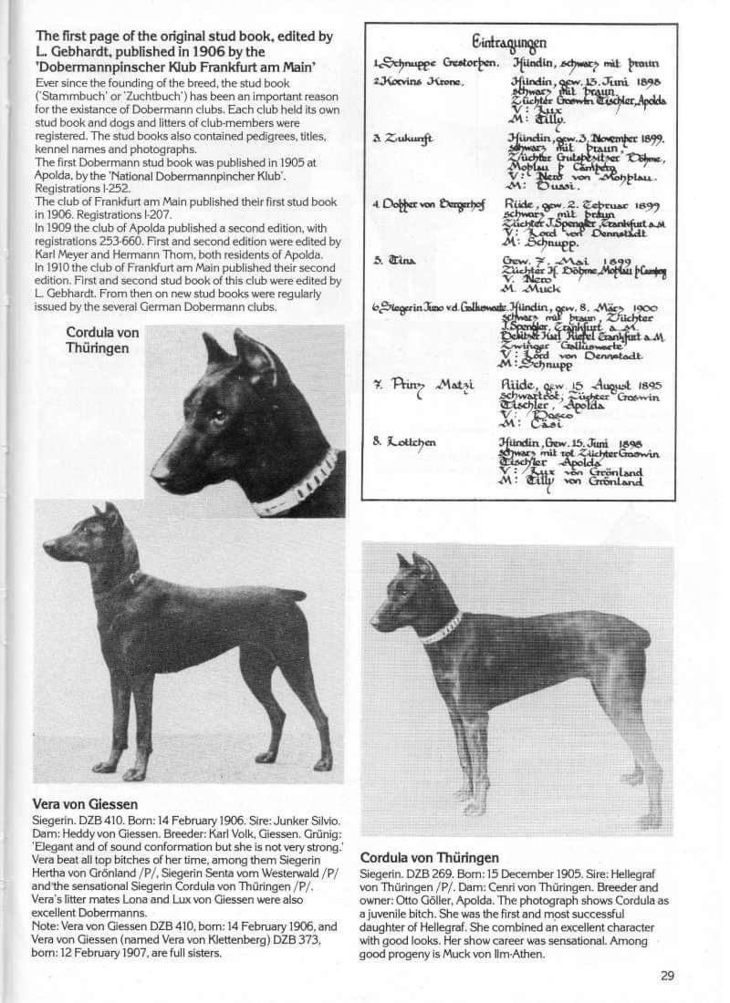 Pin By Jackie Sevalstad On Dogs Stud Book Breeds Frankfurt Am Main