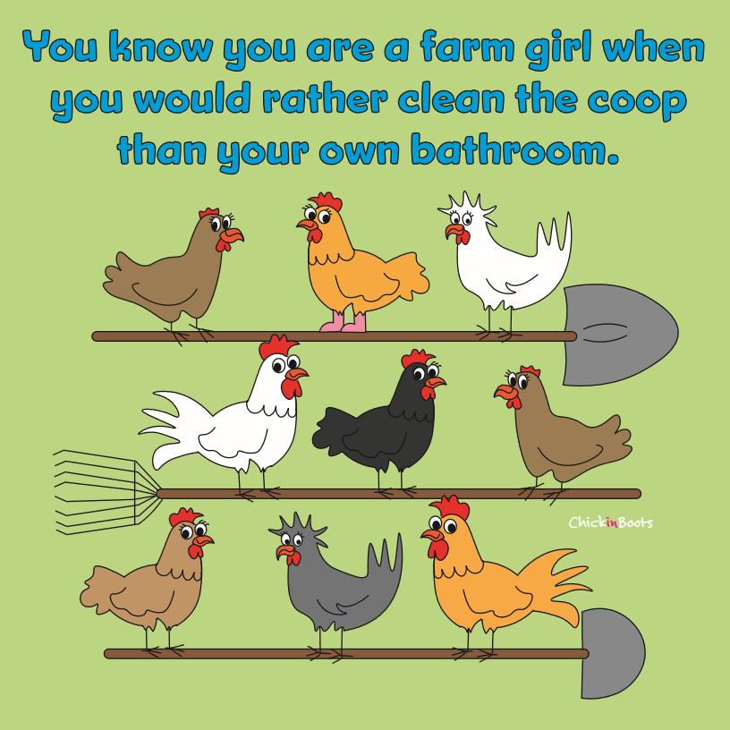 Pin By Iris On Dagelijks Leven Daily Life Funny Chicken Memes Chicken Humor Chickens Backyard