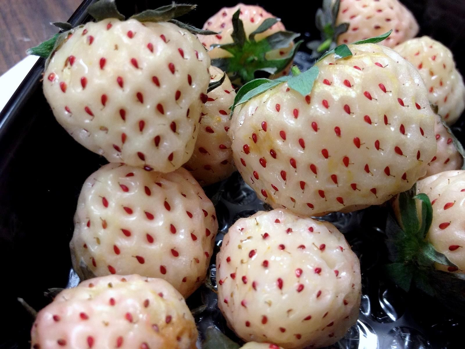 Your Go-to Guide on How to Grow Pineberries - I didn't even knew these existed. Here is everything you need to know about pineberries