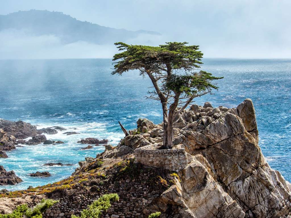 Lone Cypress 17 Mile Drive Between Pebble Beach And Carmel