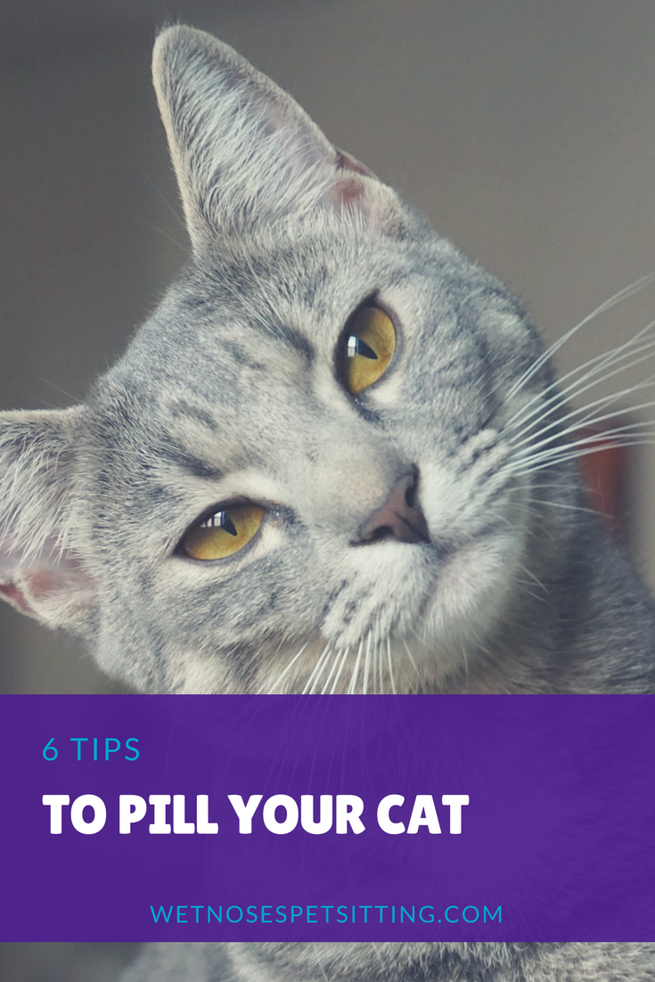 How Do I Give My Cat A Pill Cat Care Cat Parenting Cat Care Tips