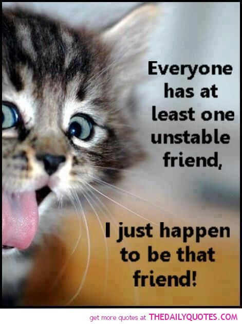 Cute Kitten Pictures With Sayings : kitten, pictures, sayings, Everyone, Least, Unstable, Friend:-@julia, Thats, Quotes, Funny,, Quotes,