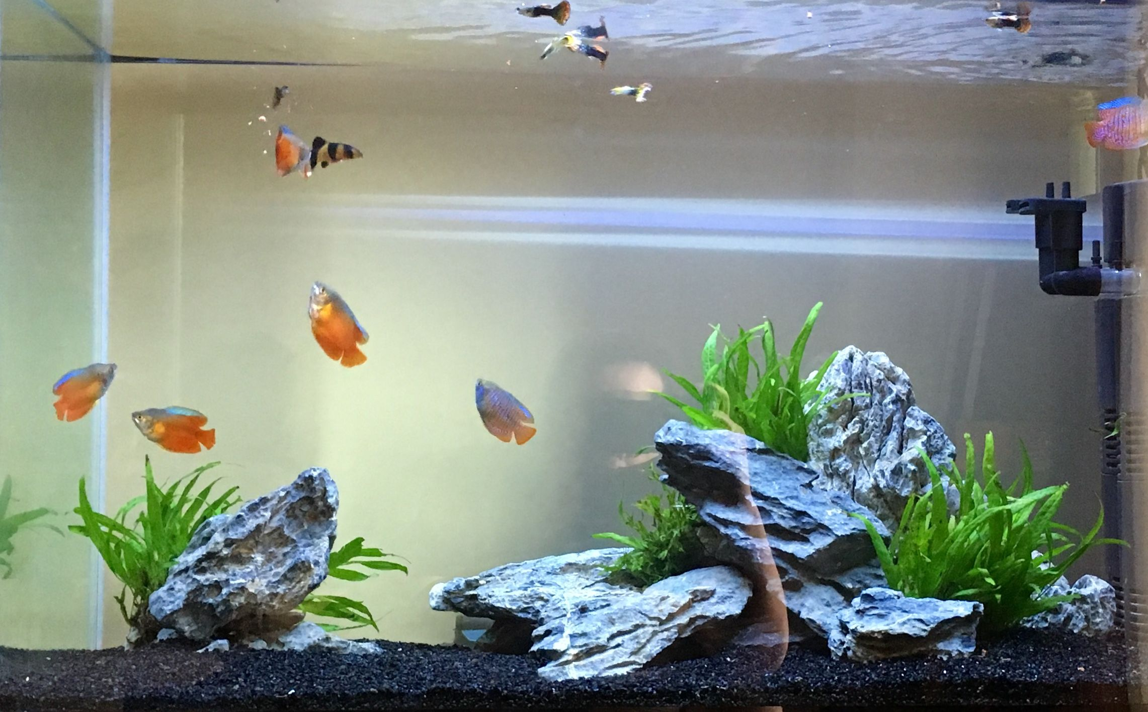 Pin By Fael On Aquascape Pinterest Aquariums Fish Tanks And