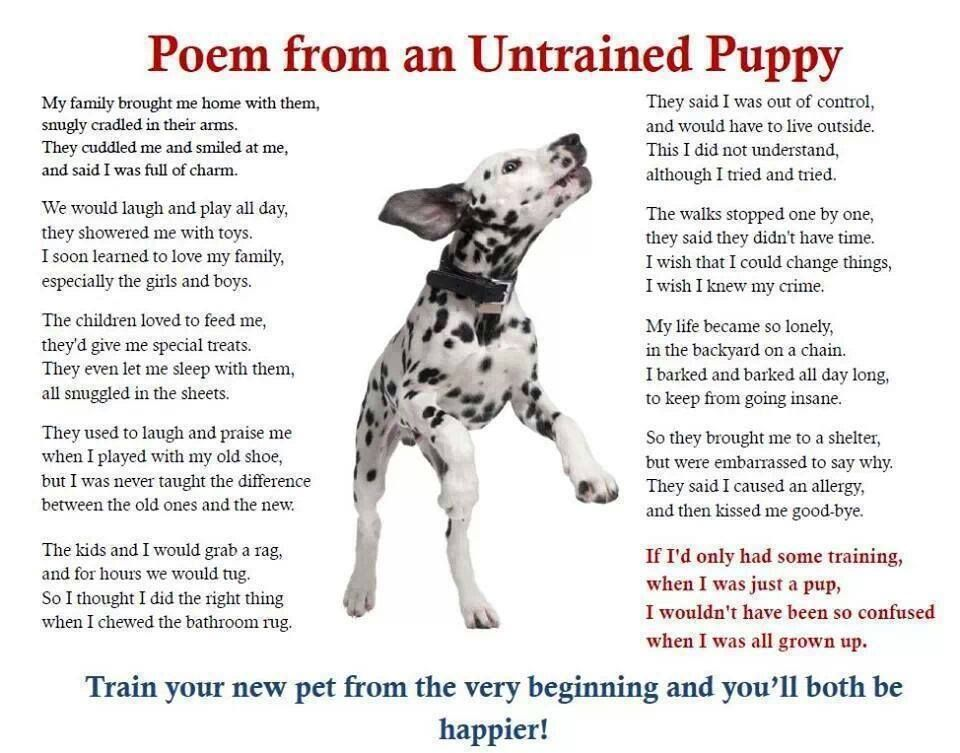 Poem from an Untrained Pup | ~ Love them Dogs ~ | Puppies