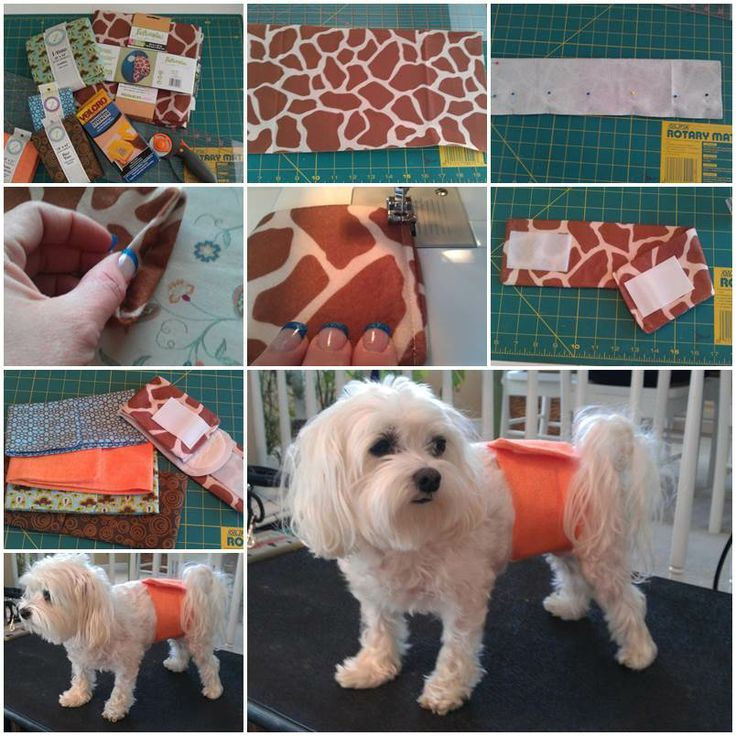 dog belly bands | DIY Belly Bands for Dogs | Pretty crafty ideas ...