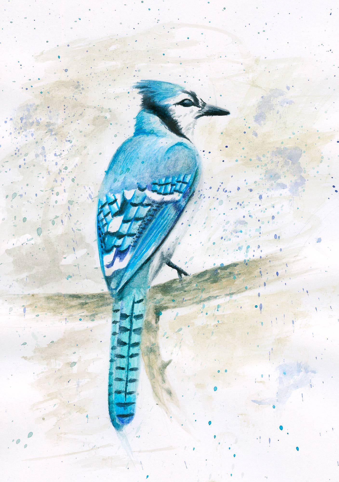 Eisvogel Aquarell Blau Tier Vogel Gemalt Eisvogel Aquarell