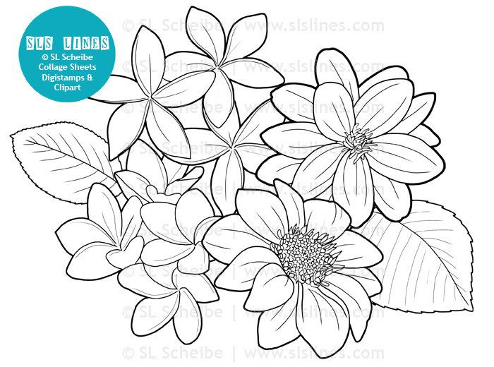 Digistamp Flowers Dahlias Coloring Page Digital Stamp Flower