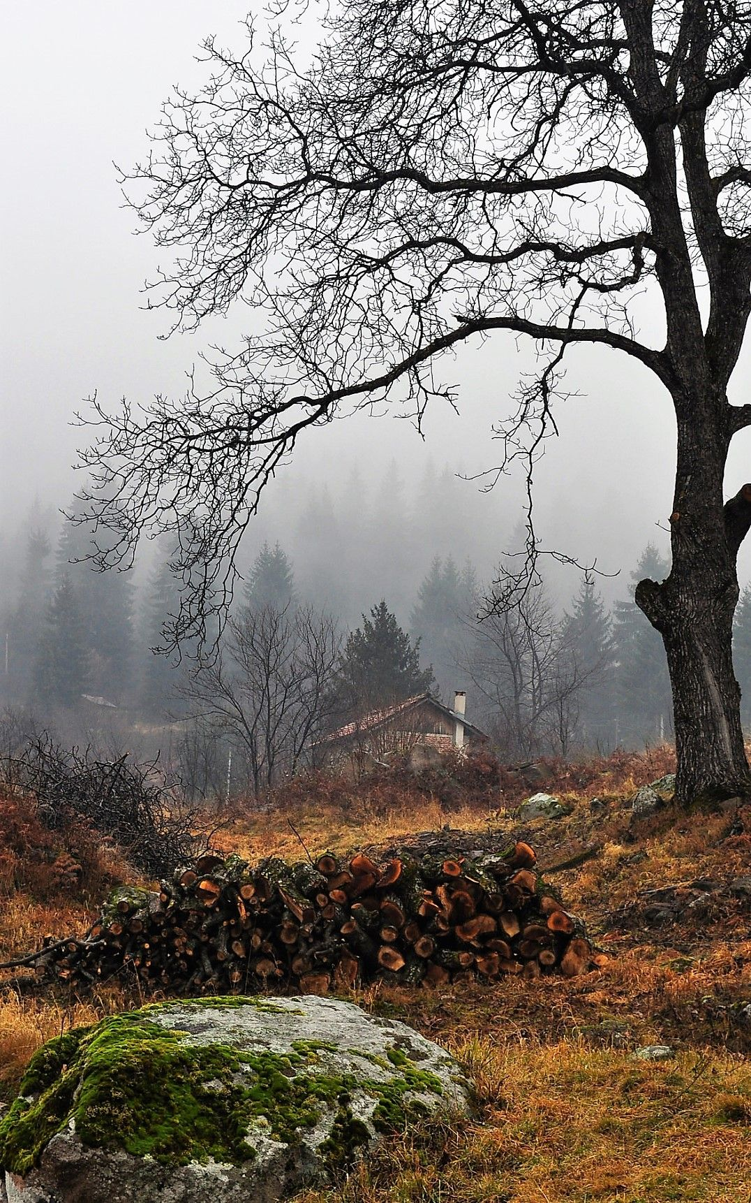 Pin By Sam Zuckfink Witz On I Just Really Like Cabins Autumn Scenes Landscape Nature