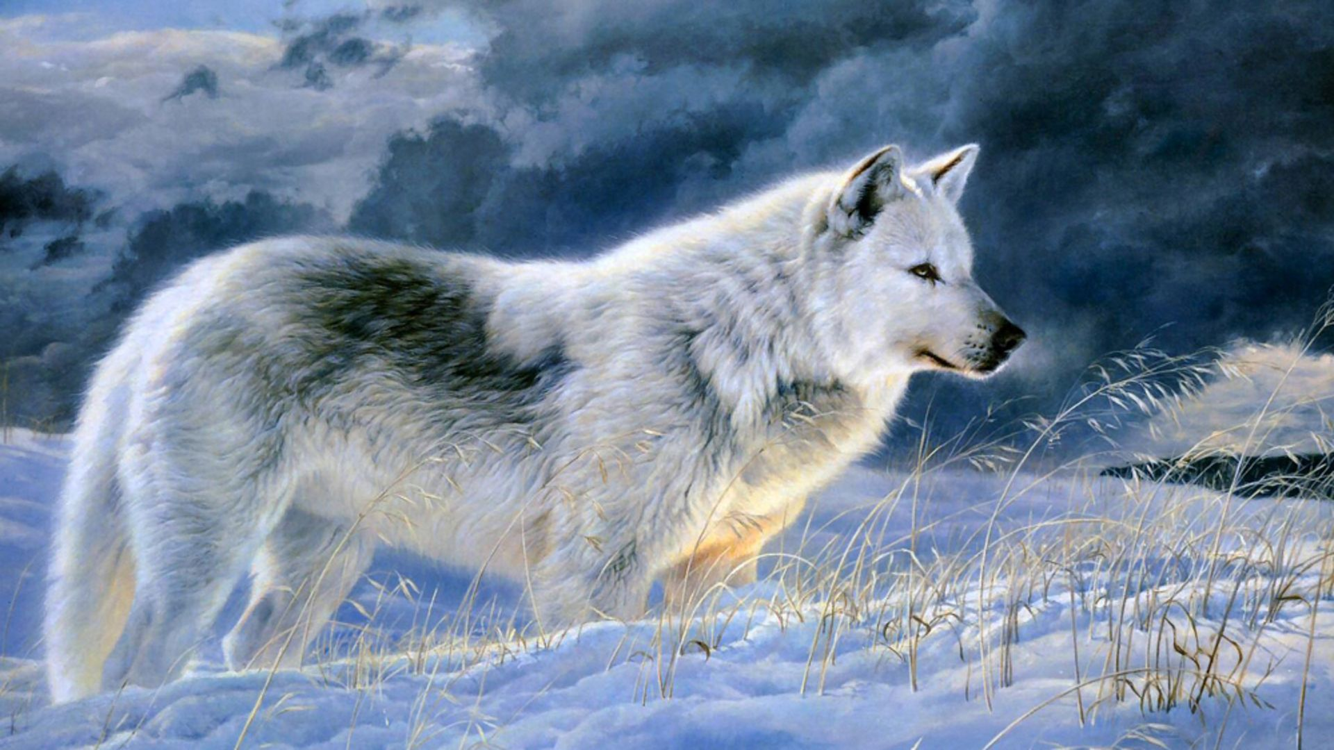 Must see Gray Wolf Wallpaper High Quality - 2b607a5ccba7fdfb185fbada2df939ab  You Should Have_20169.jpg