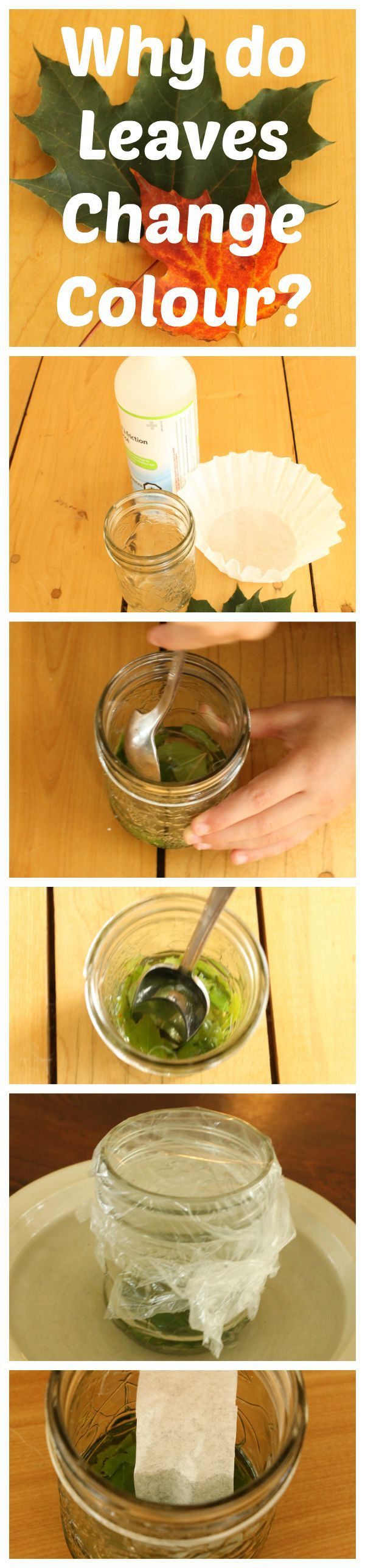 Science experiments for kids why do leaves change color herbst pinterest experiment - Schulprojekte ideen ...